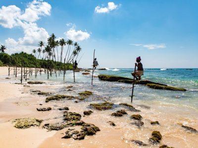 Locals climbing poles on the beautiful beaches of Sri Lanka