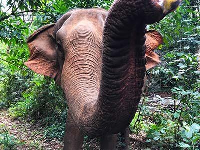 elephant-siem-reap-digital-nomad-hacker-paradise