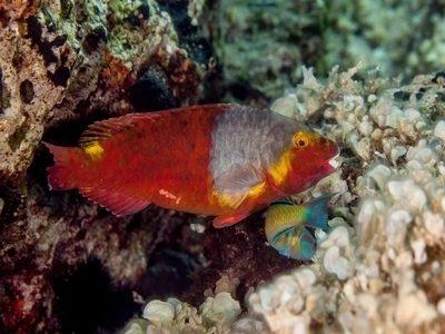 las-palmas-highlight-marine-life