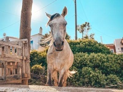 rsz_horse-back-riding-lesbos-greece